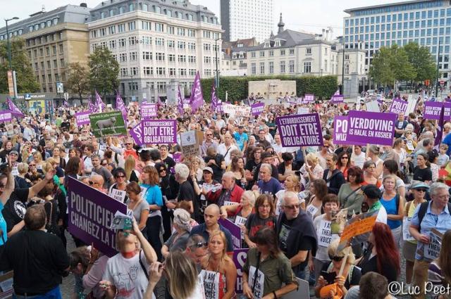des-milliers-de-manifestants-a-bruxelles-contre-labattage-sans-etourdissement-des-animaux
